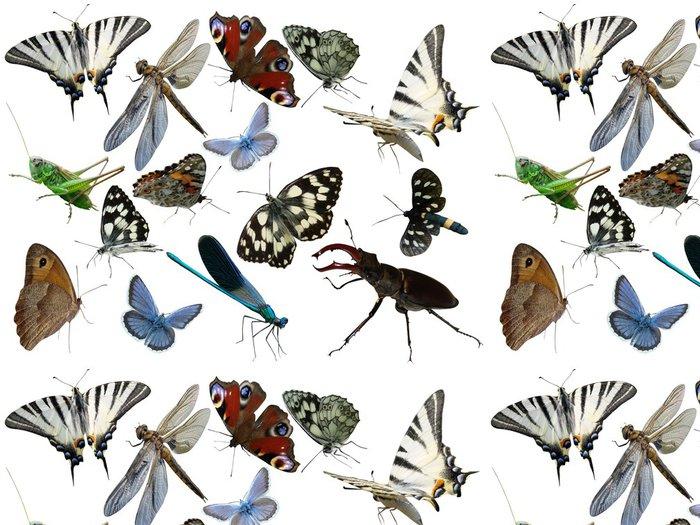 Tapeta Pixerstick Motýli Vážka chyby hmyz je izolovaný - Ostatní Ostatní