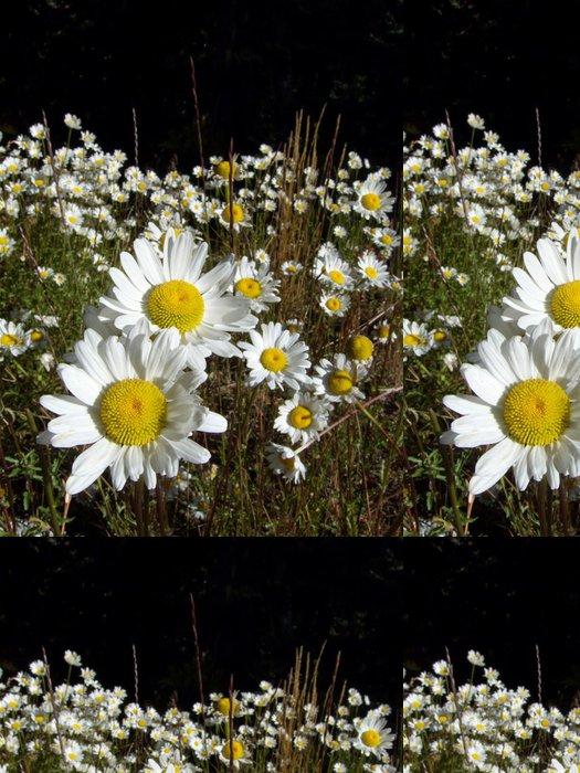 Vinylová Tapeta Mountain Daisies - Květiny