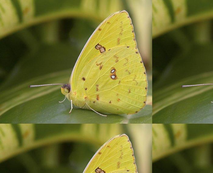 Tapeta Pixerstick Mráčku obří síry motýl - Ostatní Ostatní
