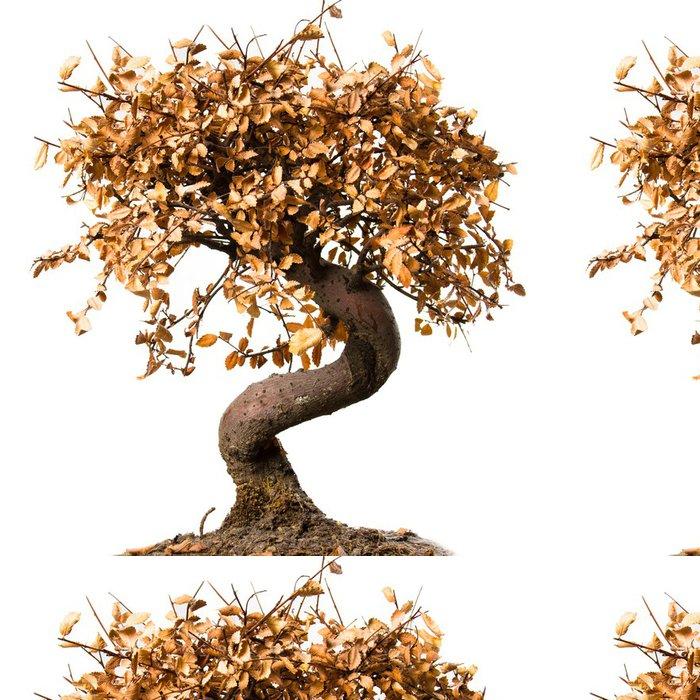 Tapeta Pixerstick Mrtvý strom bonsai - Život