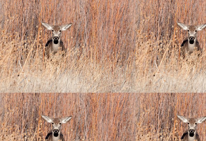 Tapeta Pixerstick Mule jelen laň v poli - Savci