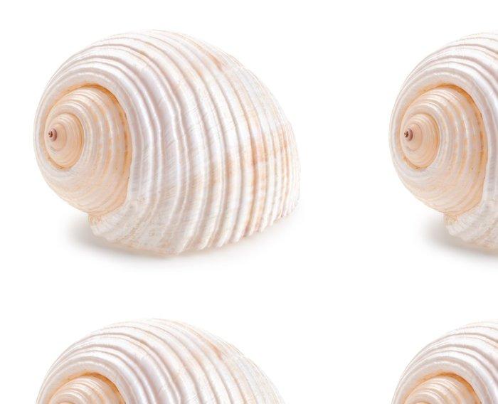 Tapeta Pixerstick Mušle v close-up izolovaných na bílé - Vodní a mořský život