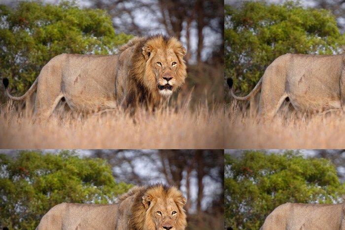 Tapeta Pixerstick Muž lev - Afrika