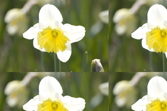 Tapeta Pixerstick Narcis - Květiny