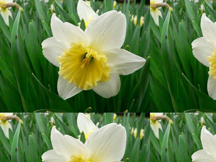 Tapeta Pixerstick Narcisy kvetou - Květiny