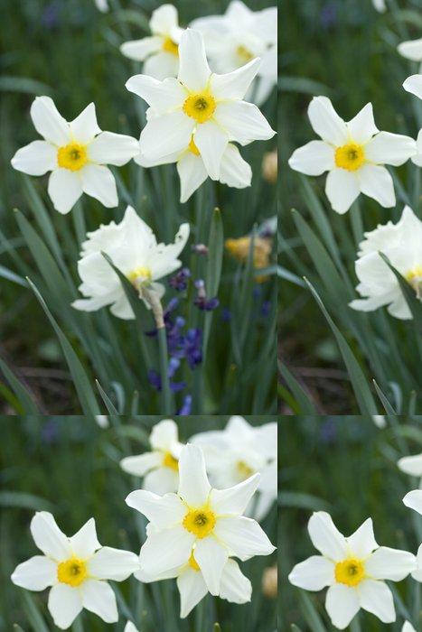Vinylová Tapeta Narcisy - Květiny