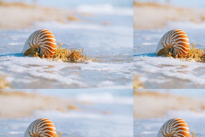 Tapeta Pixerstick Nautilus shell na bílém Floridy písku pláže pod slunečními paprsky - Prázdniny