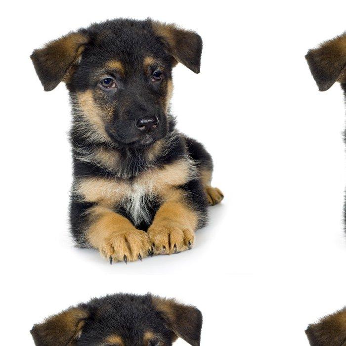 Tapeta Pixerstick Německý ovčák (7 týdnů) / vlčák, policejní pes - Savci