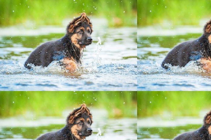 Vinylová Tapeta Německý ovčák štěně spuštěn ve vodě - Savci