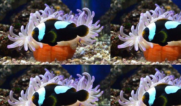 Tapeta Pixerstick Nemo ryby a mořské sasanky - Vodní a mořský život