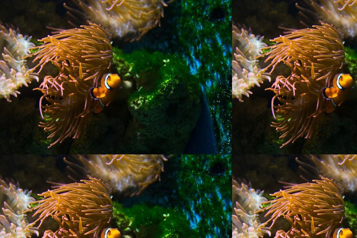 Tapeta Pixerstick Nemo - Vodní a mořský život