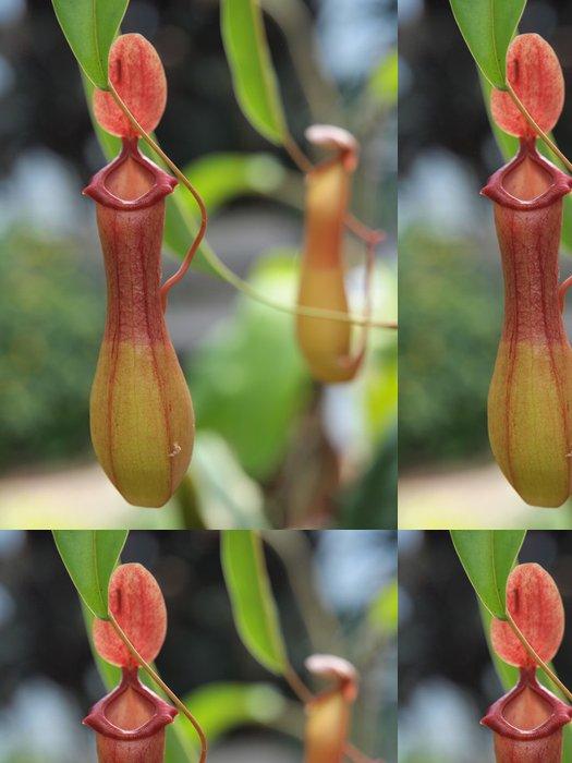 Tapeta Pixerstick Nepenthe tropická masožravec špirlice - Rostliny