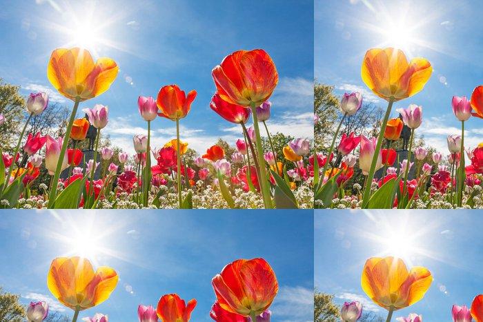 Tapeta Pixerstick Nízký úhel pohledu na tulipány - Témata