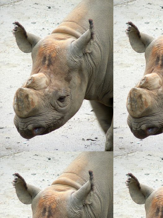 Tapeta Pixerstick Nosorožec hlava - Savci