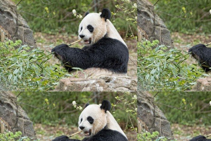 Tapeta Pixerstick Obří panda při jídle bambusu - Témata