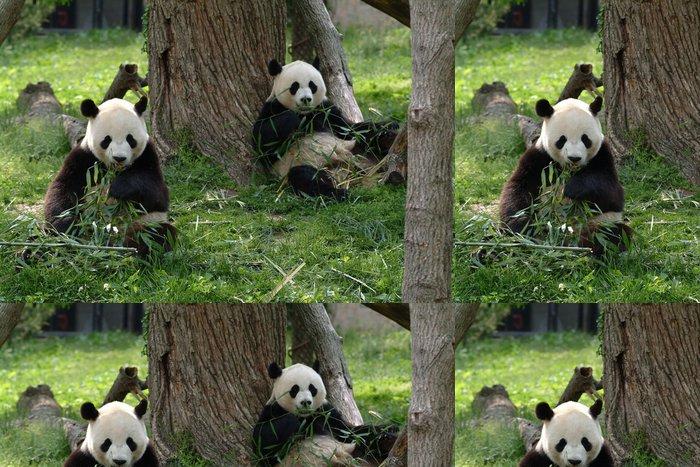 Tapeta Pixerstick Obří pandy v poli - Témata