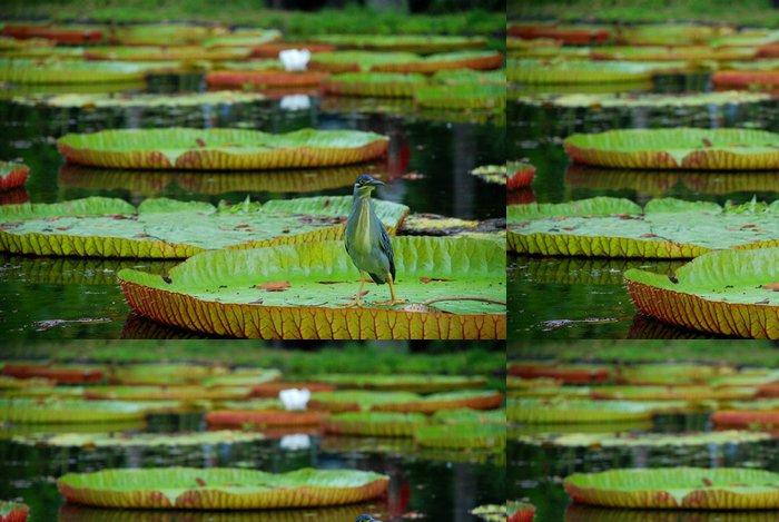 Tapeta Pixerstick Obří vodní lilie. Botanická zahrada, Pamplemousses, Mauricius - Asie