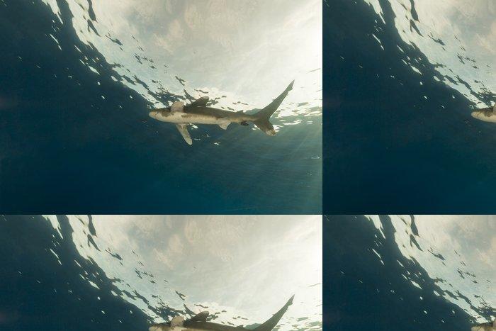 Vinylová Tapeta Oceanic Whitetip žralok (Carcharhinus longimanus) - Vodní a mořský život