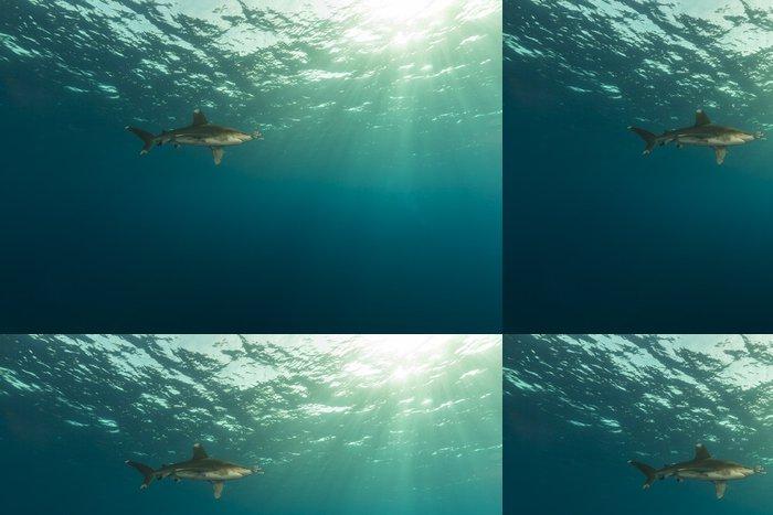 Tapeta Pixerstick Oceanic Whitetip žralok (Carcharhinus longimanus) - Vodní a mořský život