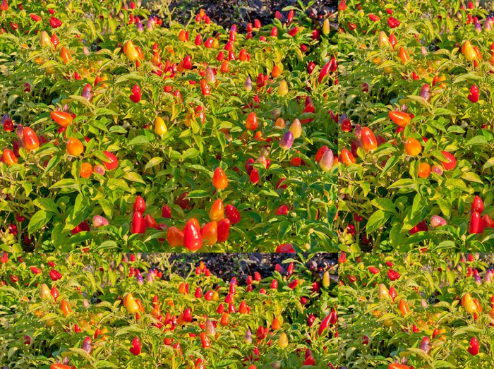Tapeta Pixerstick Okrasné rostliny papriky v zahradě - Roční období