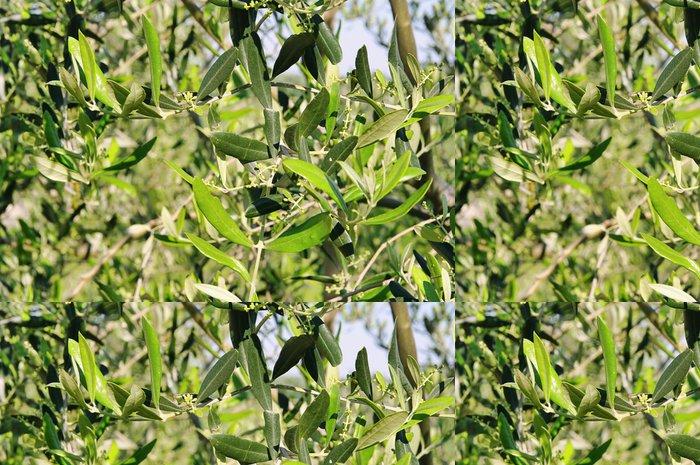 Tapeta Pixerstick Olivenbaum bluete - olivovník květ 04 - Evropa