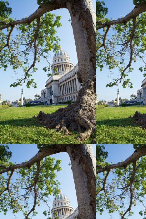 Tapeta Pixerstick Olmo nel Parco del Capitolio. - Amerika
