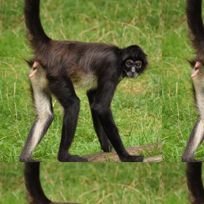 Tapeta Pixerstick Opice - Pozadí