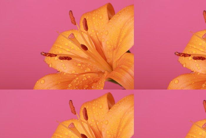 Tapeta Pixerstick Orange flower - Květiny