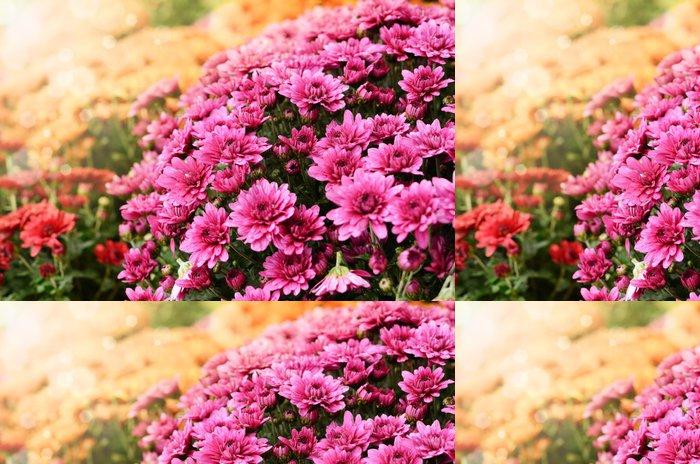 Tapeta Pixerstick Oranžové a červené chryzantémy květiny na pozadí - Rostliny