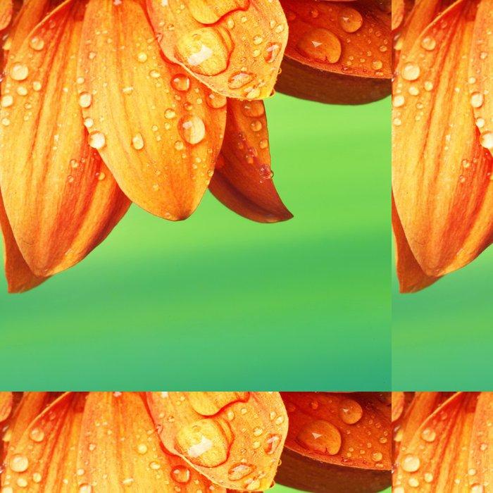 Vinylová Tapeta Oranžové okvětní lístky s vodou kapky na to - Květiny