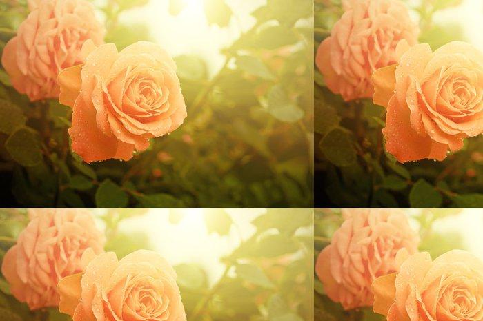 Tapeta Pixerstick Oranžové růže - Štěstí