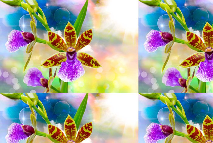 Vinylová Tapeta Orchid Flower Close Up - Květiny