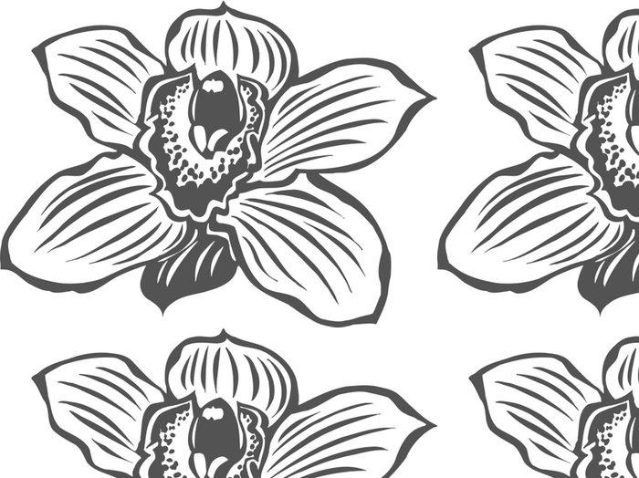 Tapeta Pixerstick Orchid Vinyl Připraveno vektorové ilustrace - Květiny