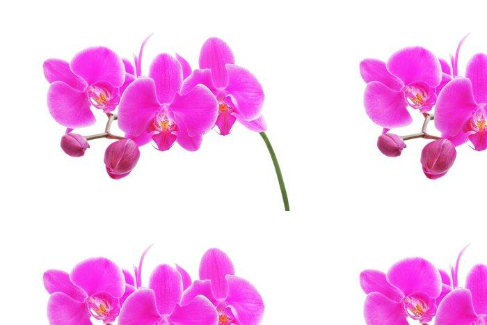Tapeta Pixerstick Orchidea - Nálepka na stěny