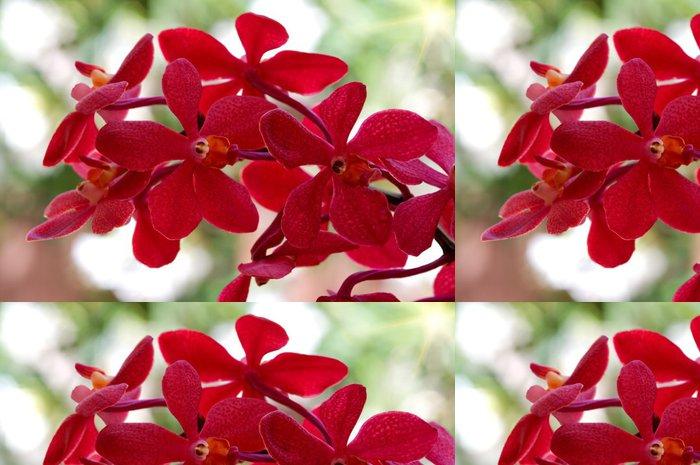 Tapeta Pixerstick Orchidea - Květiny