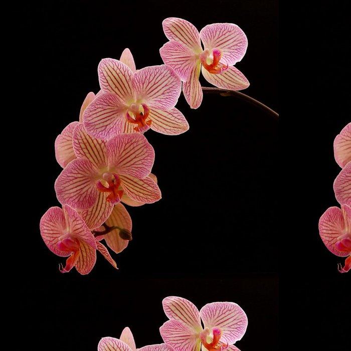 Vinylová Tapeta Orchidee - Criteo