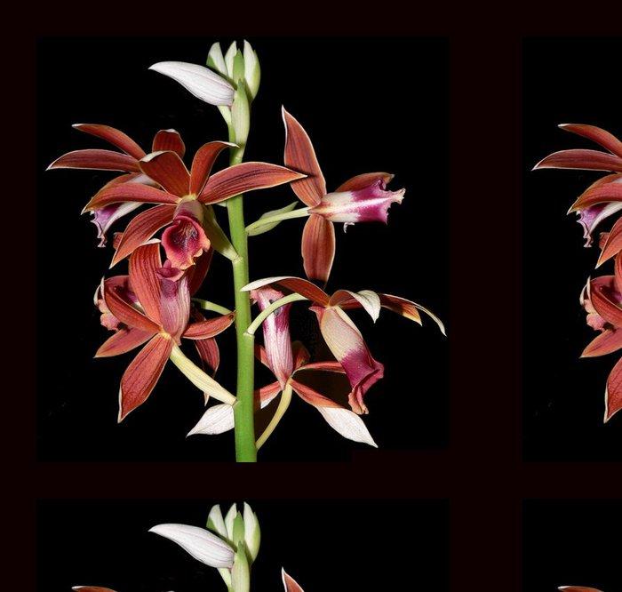 Tapeta Pixerstick Orchidej 11 - Květiny