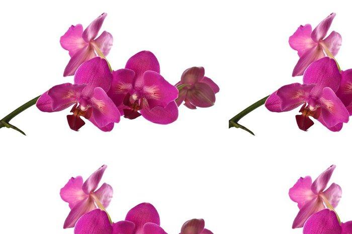 Tapeta Pixerstick Orchidej izolované přes bílé - Nálepka na stěny