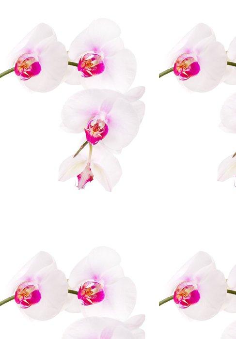 Tapeta Pixerstick Orchidej na bílém - Nálepka na stěny