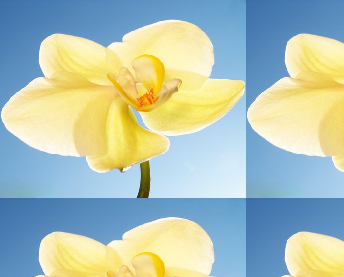 Tapeta Pixerstick Orchidej na modré obloze - Květiny