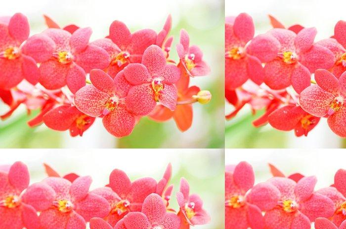 Tapeta Pixerstick Orchideje - Květiny