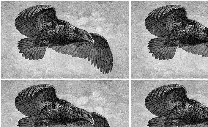 Tapeta Pixerstick Orel létání - Témata