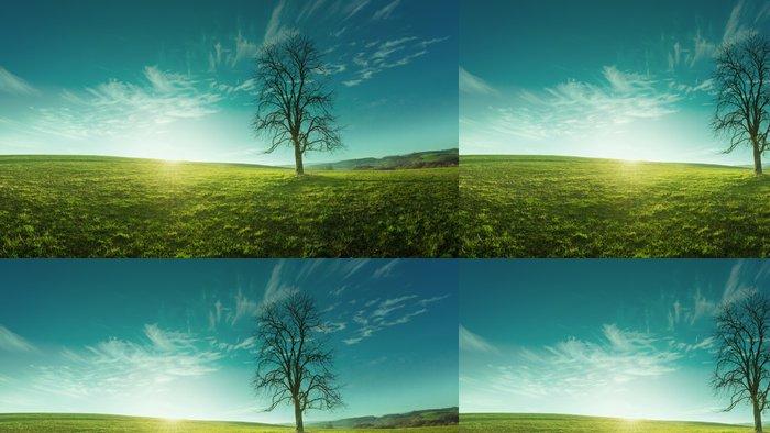 Tapeta Pixerstick Osamělý strom na louce za úsvitu, idylický, pohádkové krajiny - Roční období