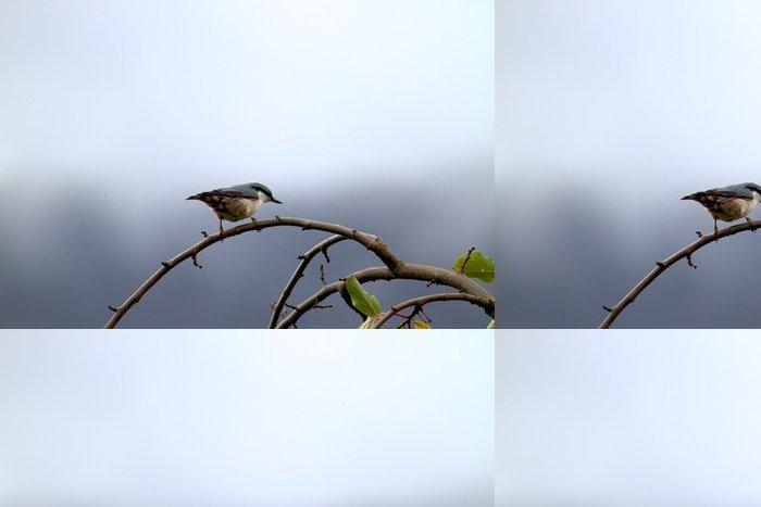 Vinylová Tapeta Osamělý vrabec - Ptáci