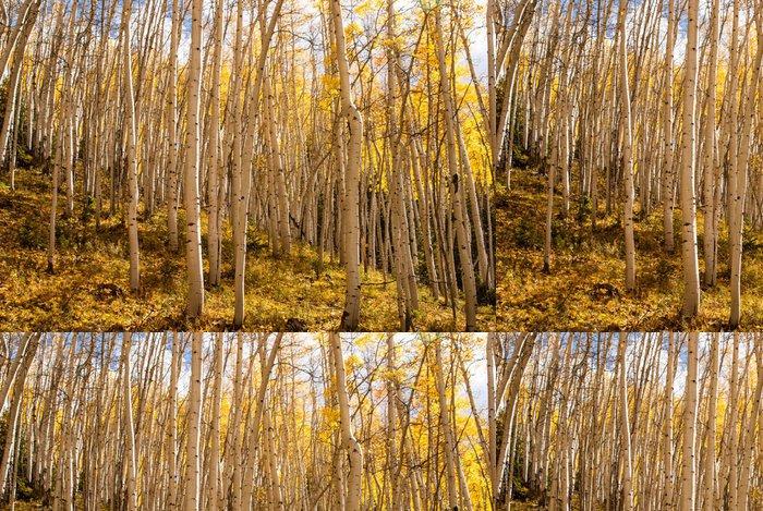 Vinylová Tapeta Osiky stromy na slunci - Amerika
