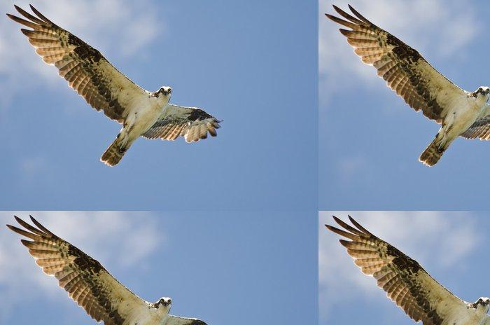 Tapeta Pixerstick Osprey Making Oční kontakt během letu ve Blue Sky - Ptáci