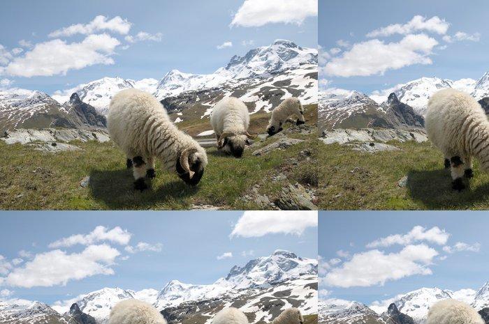 Tapeta Pixerstick Ovce před Monte Rosa ve švýcarských Alpách - Evropa