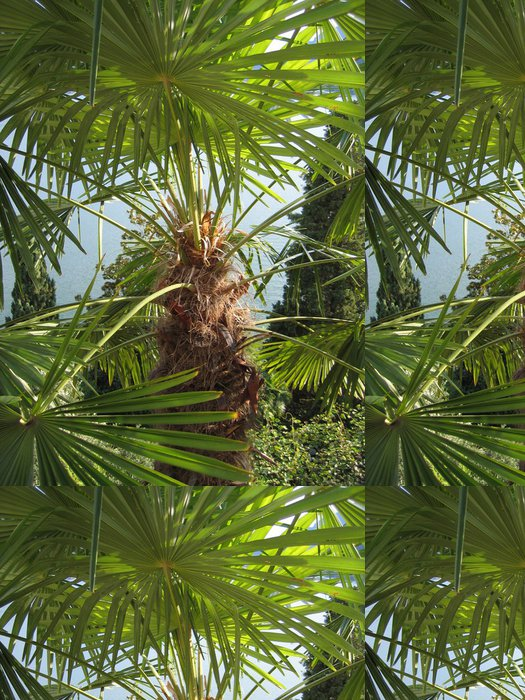 Tapeta Pixerstick Palm - Ticino - Evropa