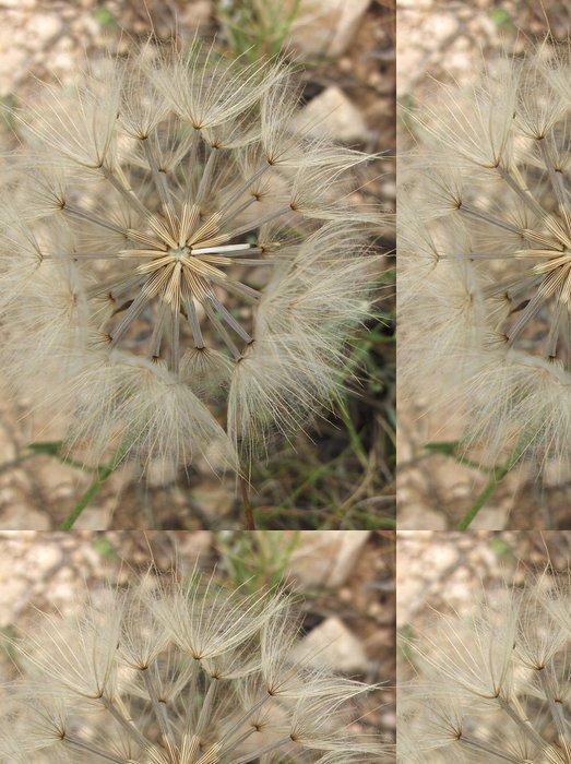 Vinylová Tapeta Pampeliška semena - Roční období