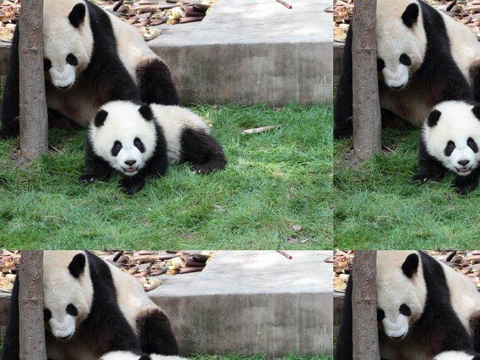 Tapeta Pixerstick Panda s mládětem - Témata